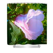 Flower With Painted Look Shower Curtain