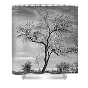 Trees Are Talking To Us Shower Curtain