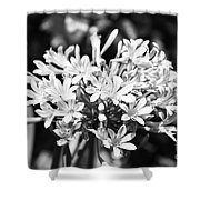 Flowering Blue African Lily Of The Nile Shower Curtain