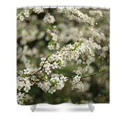 Flowering Branches Shower Curtain