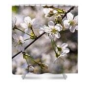 Flowering Cherry Tree Branch 4 Shower Curtain