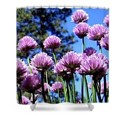 Flowering Chives Shower Curtain