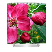 Flowering Crab Apple Shower Curtain