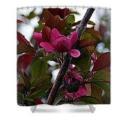 Flowering Crabapple Shower Curtain