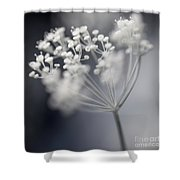 Flowering Dill Cluster Shower Curtain