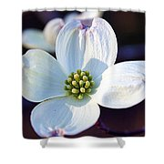 Flowering Dogwood Shower Curtain