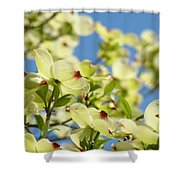 Flowering Dogwood Tree Art Print White Dogwood Flowers Blue Sky Art Shower Curtain