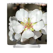 Flowering Fruit Tree Shower Curtain