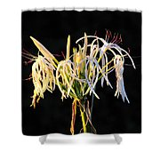 Flowering In Florida Shower Curtain