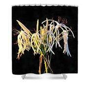 Flowering In Florida Shower Curtain