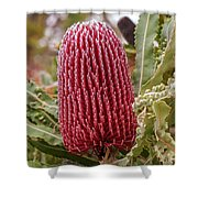 Flowering In Red Shower Curtain