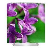 Flowering Lilac Shower Curtain