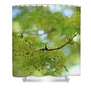 Flowering Maple Tree Shower Curtain