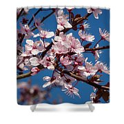 Flowering Of The Plum Tree 5 Shower Curtain