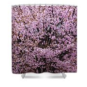 Flowering Pink In Spring Shower Curtain