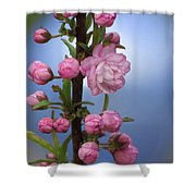 Flowering Pink On Blue Shower Curtain