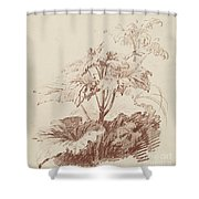 Flowering Plant With Buds Shower Curtain