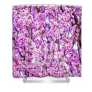 Flowering Plum Blossoms. Shower Curtain