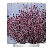 Flowering Plum In Bloom Shower Curtain