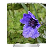 Flowering Purple Anemone Flower Blossom In A Garden Shower Curtain