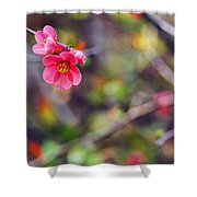 Flowering Quince In Spring Shower Curtain