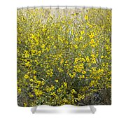 Flowering Tarweed Shower Curtain