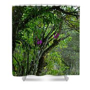 Flowering Trees Near The Path Shower Curtain