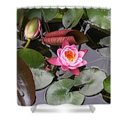 Flowering Water Lily Shower Curtain