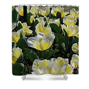Flowering Yellow And White Tulips In A Spring Garden  Shower Curtain