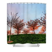 Flowering Young Cherry Trees On A Green Hill In The Park  Shower Curtain