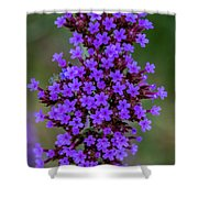 Flower_lavender 1072v Shower Curtain