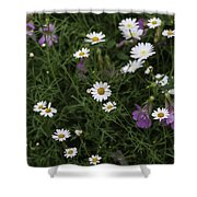 Flowers 6 Shower Curtain