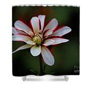 Flowers 66 Shower Curtain