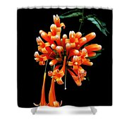Flowers 69 Shower Curtain