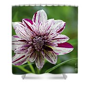 Flowers 70 Shower Curtain