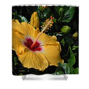 Flowers 727 Shower Curtain