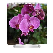 Flowers 820 Shower Curtain