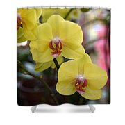 Flowers 821 Shower Curtain