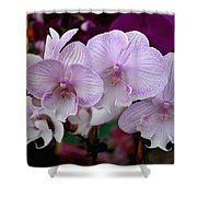 Flowers 824 Shower Curtain