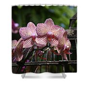 Flowers 826 Shower Curtain