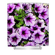 Flowers Alaska July  Shower Curtain