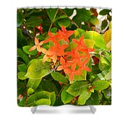 Flowers And Foliage Shower Curtain