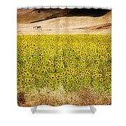 Flowers And Horses Near Setinil Spain Shower Curtain