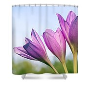 Flowers Crocuses Shower Curtain