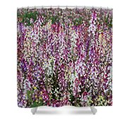 Flowers Forever Shower Curtain