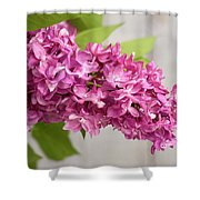 Flowers - Freshly Cut Lilacs Shower Curtain
