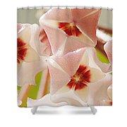 Flowers-hoya 1 Shower Curtain