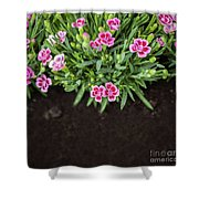 Flowers In Grass Growing From Natural Clean Soil Shower Curtain