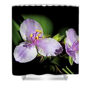 Flowers In Natural Light Shower Curtain