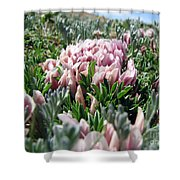 Flowers In The Alpine Tundra Shower Curtain